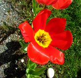 Mit Blumen im Garten Stockfotos