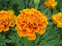 Mit Blumen vom Leben Stockbild