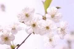 Mit Blumenaromatherapy Lizenzfreie Stockfotos