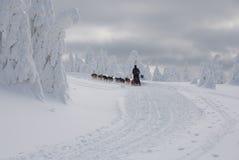 Mit dogsled auf den Kamm Orlicke Hügeln lizenzfreie stockfotos