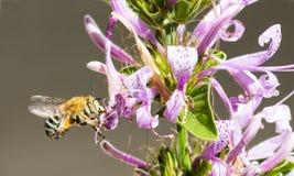 Mit einem Band versehene Biene und Blumen Lizenzfreies Stockbild
