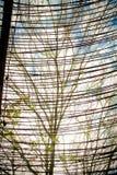 Mit einem Gatter versehener Baum stockbilder
