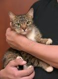 Mit einer grauen gestreiften Katze Stockfoto
