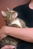 Mit einer grauen gestreiften Katze Stockbild