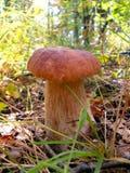 Mit einer Kappe bedeckter Pilz Lizenzfreie Stockfotografie