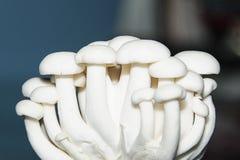Mit einer Kappe bedeckter Pilz Lizenzfreies Stockfoto