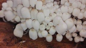 Mit einer Kappe bedeckter Pilz Stockfoto