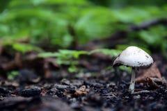 Mit einer Kappe bedeckter Pilz Lizenzfreie Stockbilder
