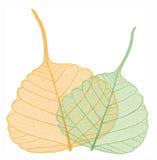 Mit Filigran geschmückte Blätter, Vektor Stockfoto