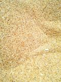 Mit gelbem Sand Lizenzfreies Stockbild