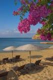Mit gelbem Sand und helle Blumen des Paradiesstrandes Stockbild