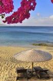Mit gelbem Sand und schöne Blumen des Paradiesstrandes Lizenzfreie Stockfotografie
