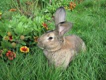Mit Gras zu bedecken Kaninchen Lizenzfreie Stockbilder