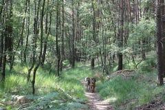 Mit Hund in der Natur Stockbilder