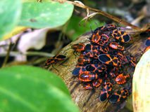 Mit Insekten Stockfotografie