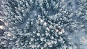 Mit Rotationsbewegung über großem Wald im kalten Winter oben fliegen stock footage