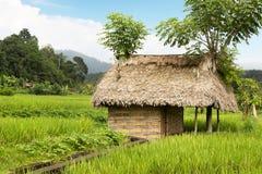 Mit Stroh gedeckte Hütte unter Bauernhofernten stockbild