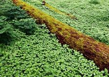 Mit Teppich ausgelegter Wald Stockfotografie