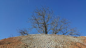Mit Ziegeln gedecktes Dach stockbild