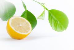 Mitad de un limón y una ramita Foto de archivo libre de regalías