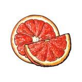 Mitad y cuarto del pomelo rosado maduro, ejemplo dibujado mano ilustración del vector