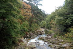Mitake Shosenkyo si rimpinza di e corrente del moutain con le foglie di autunno rosse Immagine Stock