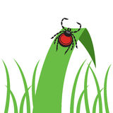 Mite dangerous parasite vector illustration Royalty Free Stock Photography