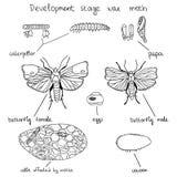 Mite de cire d'étape de développement illustration de vecteur