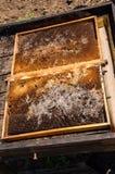Mite de cire l'apiculture Parasites des ruches actives Nid infecté d'abeille photo stock