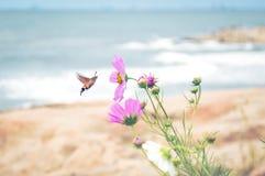 Mite de colibri photo libre de droits