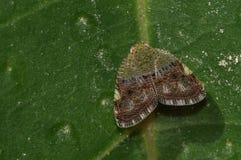 Mite - espèces non identifiées Images stock