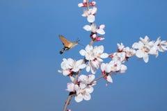 Mite et fleur images libres de droits