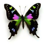 Mite multicolore photographie stock libre de droits