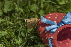 Mite sur des chaussures dans l'herbe verte Images stock