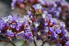 Mite sur des fleurs Photographie stock