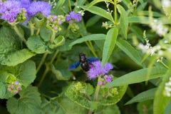 Mite sur des fleurs Photo libre de droits