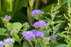 Mite sur des fleurs Photographie stock libre de droits