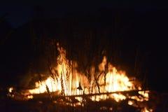 Mite sur la tige d'herbe avec le feu à l'arrière-plan Photographie stock