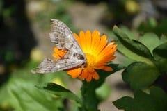 Mite sur une fleur orange photographie stock libre de droits
