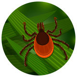 Mite in the tall green grass Royalty Free Stock Image