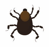 Mite , tick , nymph. Vector isolated royalty free illustration