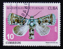 Mites de nuit, PS de Heterochroma , Famille de Noctuidae, vers 1979 Images stock