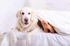 Mitfühlende Frau, die auf Bett mit ihrem Hund liegt Stockbilder