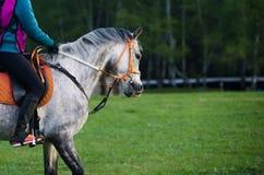 Mitfahrer auf einem Pferd Stockbilder