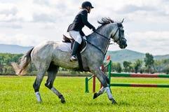 Mitfahrer auf Erscheinen springt Pferd lizenzfreie stockbilder