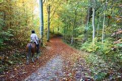 Mitfahrer auf Pferd Stockfotografie