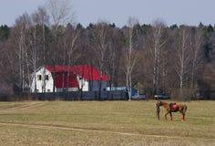 Mitfahrer mit Pferd Lizenzfreie Stockfotos