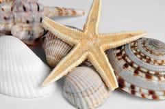 Mitili e stelle marine Fotografia Stock Libera da Diritti
