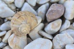 Mitilo con le pietre colorate Immagini Stock