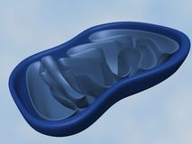 Mitochondria Royalty Free Stock Photos